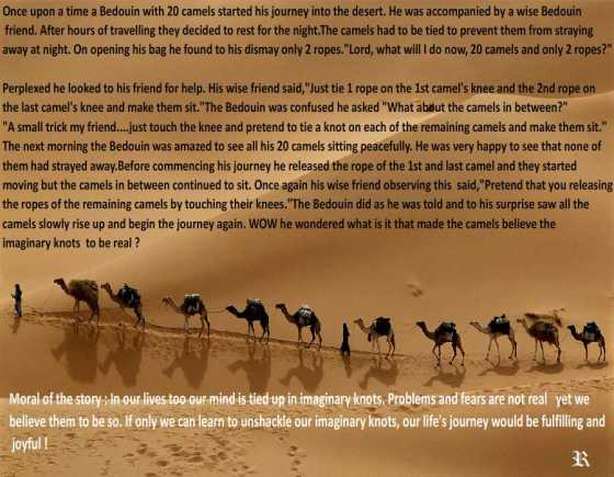 Final 2 camels......